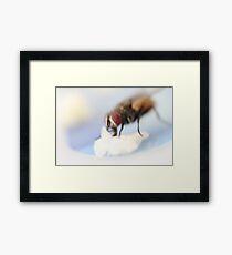 house fly closeup Framed Print