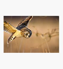 Motion Detected -- Short-eared Owl Photographic Print