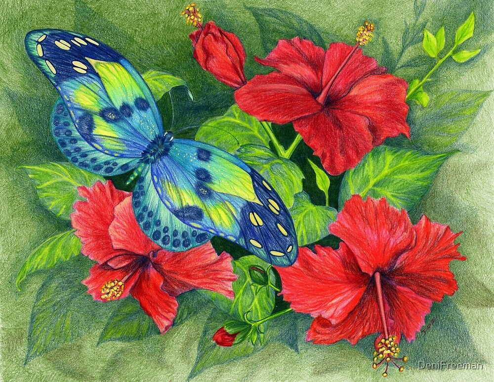 Hibiscus and Butterfly by DeniFreeman
