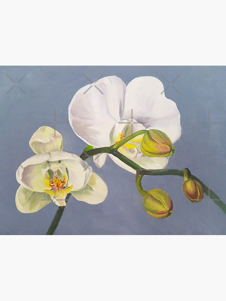 Phaelenopsis - moth orchid painting on blue by EmilyBickell