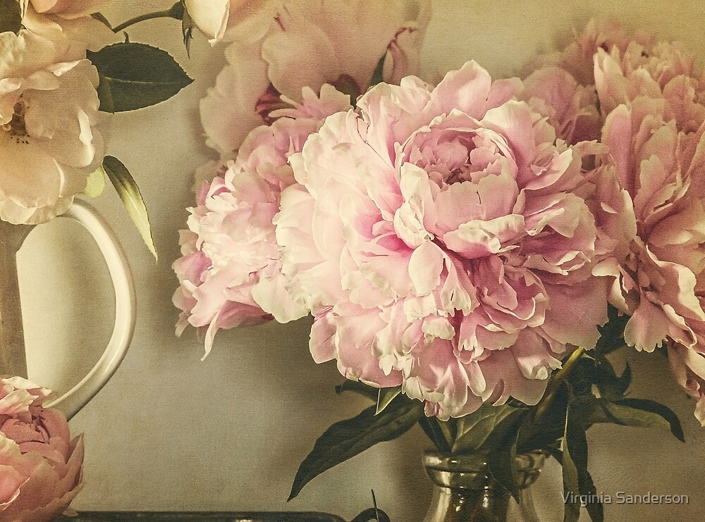 Painted Peonies -- Botanical Still Life by Virginia Sanderson