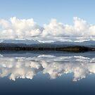 Swan Basin Reflections by Shane Viper