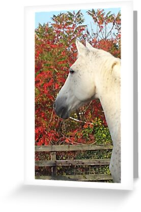 Manolo in Fall Foliage by Andreajoynow
