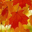 Autumn Dreams by Brenda Burnett