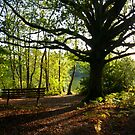 A Seat in the Woods by mikebov