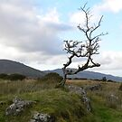 The Tree,,,, by Pat Duggan