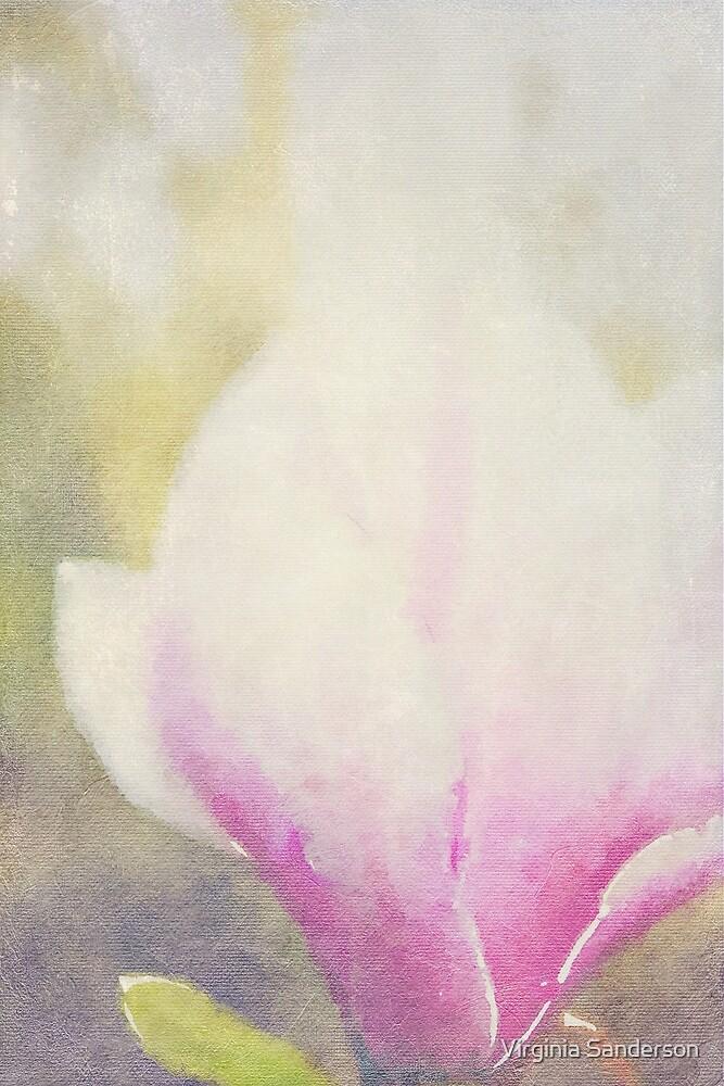 Misty Magnolia × soulangeana by Virginia Sanderson