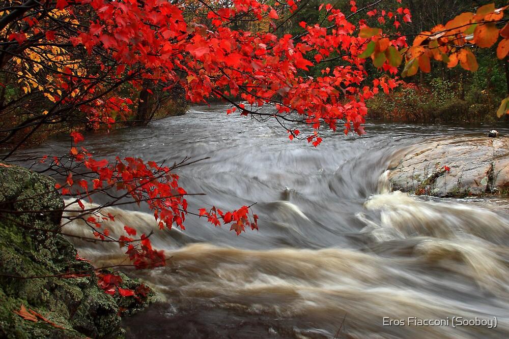 Autumn foliage over Crystal Creek Ontario Canada by Eros Fiacconi (Sooboy)