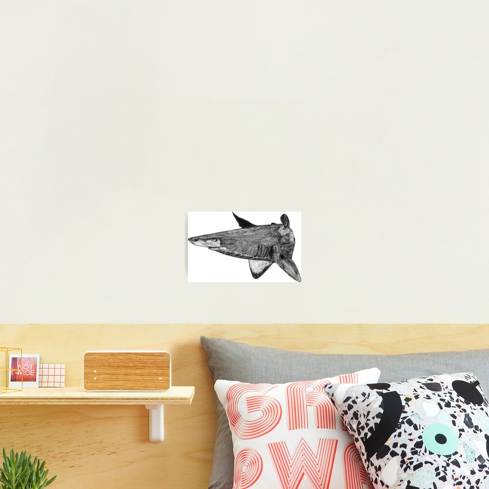 Rel the Grey Nurse Shark Photographic Print