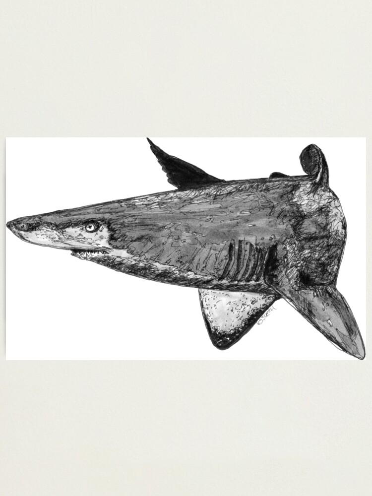 Alternate view of Rel the Grey Nurse Shark Photographic Print