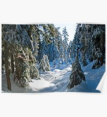 Beautiful BC Winter Day Poster