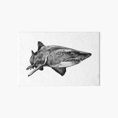 Mark the Grey Nurse Shark Art Board Print