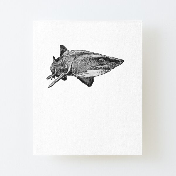 Mark the Grey Nurse Shark Canvas Mounted Print