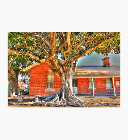 """Moreton Bay Fig Tree"" Photographic Print"