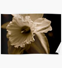 Black and White Daffodil Poster