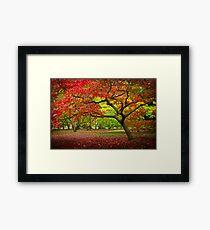 Acer Glade, Westonbirt Arboretum, England Framed Print