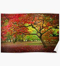 Acer Glade, Westonbirt Arboretum, England Poster