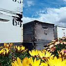 The house of honey by Akrotiri