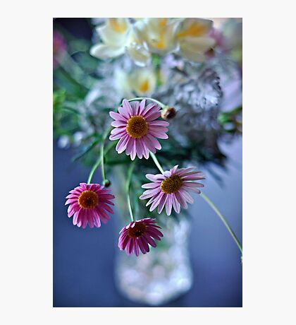 daisy spray Photographic Print