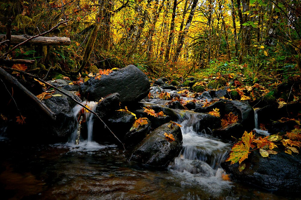 With All My Heart by Charles & Patricia   Harkins ~ Picture Oregon