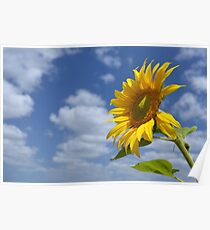 Sunflower - A Tribute to the Lockyer Valley Poster