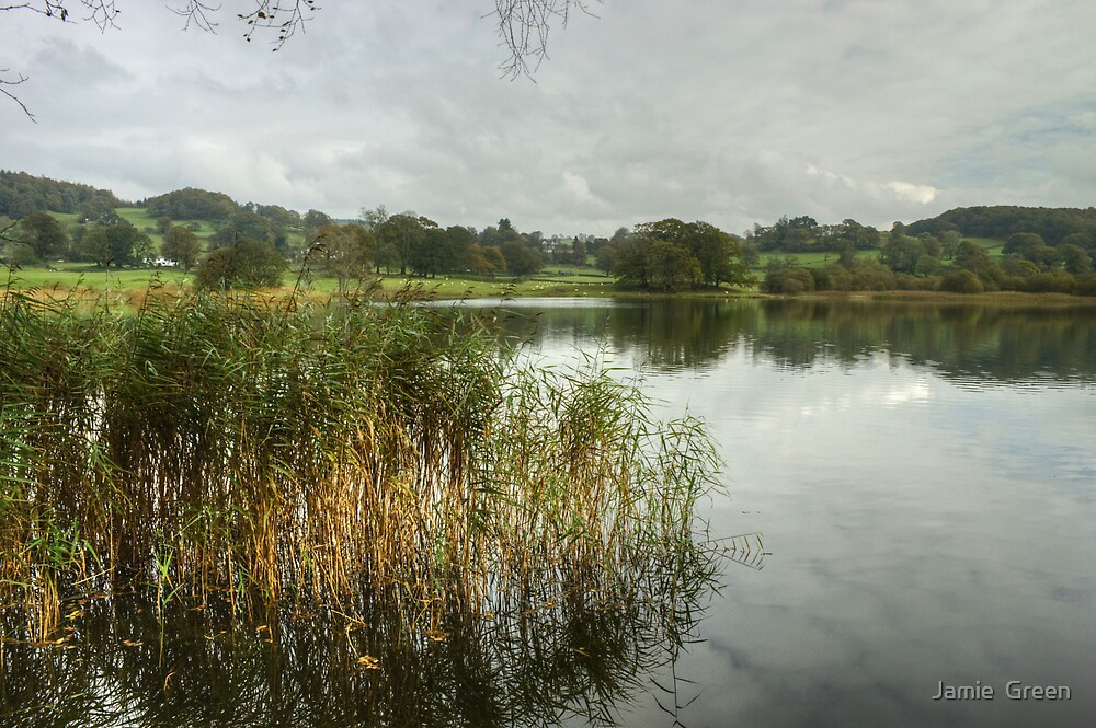 Esthwaite Water...Reeds by Jamie  Green