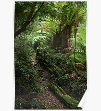Rainforest walk Poster