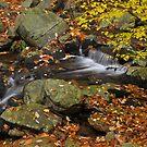 Autumn Stream - Smokey Mountains by Stephen Vecchiotti