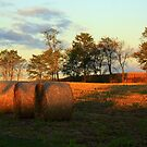 Hay Bales Revealed by Kelly Chiara