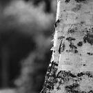 Bark by Karen Fitzsimons