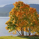 Fall in Active Pass  by TerrillWelch