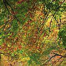Autumn's Finery by Kelly Chiara