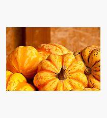 Fall Harvest Photographic Print