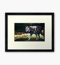 Colorful Wolf Framed Print