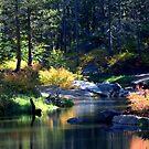 Tranquility by Lynn Bawden