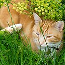 Jasper in Garden by John Hooton