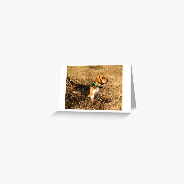 Green Country Beagles Greeting Card