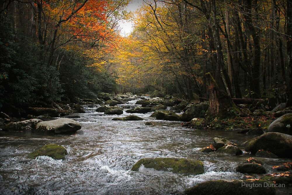 A River in Autumn by Peyton Duncan