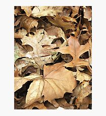 Crunchy Leaves Photographic Print
