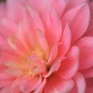 Pink and Lemon by Sea-Change