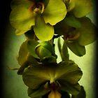 Orchid Still Life II by Mattie Bryant