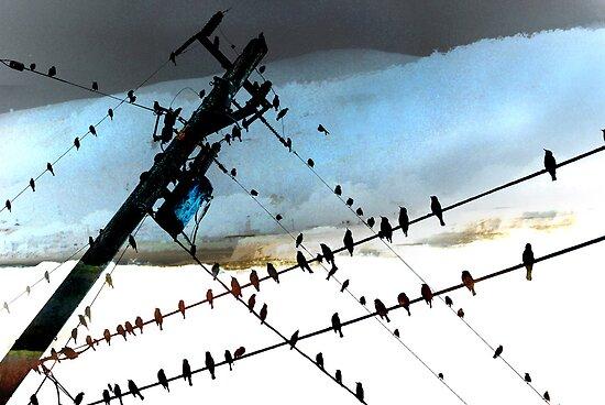 Bird Life ~ A series: cross communication by linaji