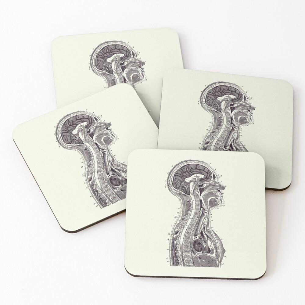Upper Body Diagram - Vintage Anatomy Print 2 Coasters (Set of 4)