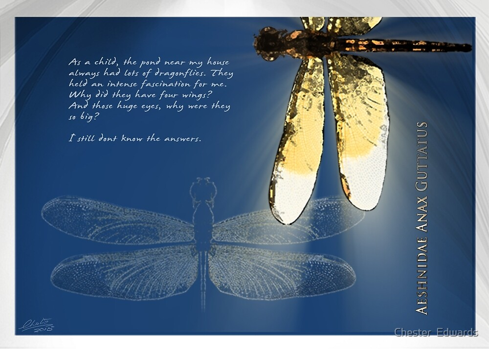 Dragonfly N.1 by Chester  Edwards