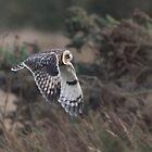 Short-eared Owl Fly Past by Nigel Tinlin