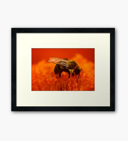 Sleeping Bee Framed Print