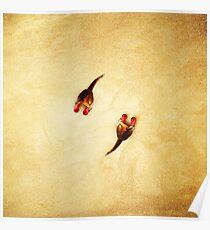 Animal Art - Boxing Kangaroos Poster