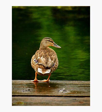 Just ducking around Photographic Print