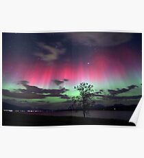 Red Auroras & the tree Poster