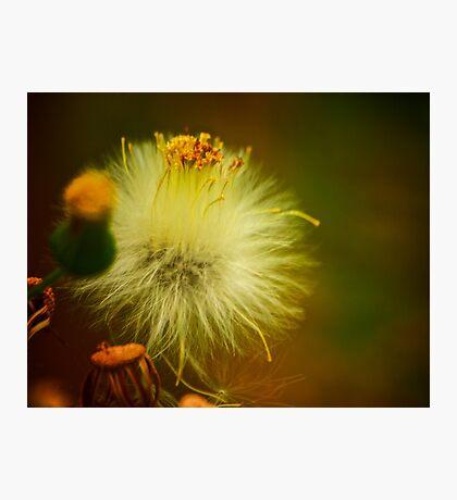 Fluffy Photographic Print